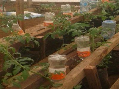 Bottle Drip Irrigation System