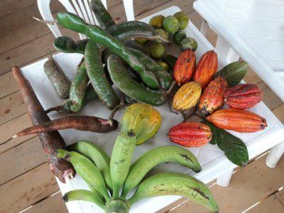 CAPACIDAD PRODUCTIVA NUTRICIONAL DE PERMATREE, Ecuador