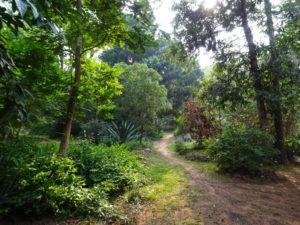 Auroville Garden