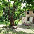 Romashka Organic farm in Belize